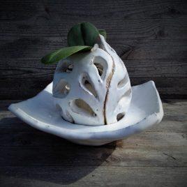 azurowa oslonka storczyk